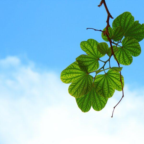 Hajautettu bioenergiaan pohjautuva lämmöntuotanto yrittäjyyden ja huoltovarmuuden edistäjänä